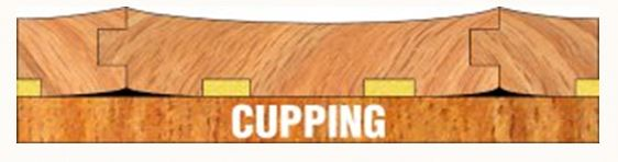 cupping